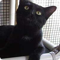 Adopt A Pet :: ELEANOR - Jackson, MO