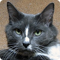 Adopt A Pet :: Buddy - Norwalk, CT
