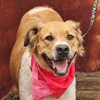 Adopt A Pet :: Remi - Peyton, CO