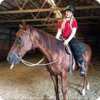 Thoroughbred Mix for adoption in Dewey, Illinois - Snapper