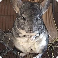 Adopt A Pet :: Benjamin - Granby, CT