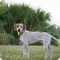 Adopt A Pet :: Colby - Palm Harbor, FL
