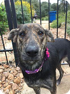 Pointer/Hound (Unknown Type) Mix Dog for adoption in New York, New York - Selma