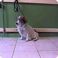 Adopt A Pet :: Bennett - Lomita, CA