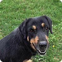 Adopt A Pet :: IDA - Wintersville, OH