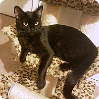 Adopt A Pet :: Tootsie - Riverside, CA