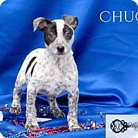 Adopt A Pet :: Chuck - DeForest, WI