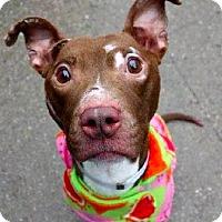 Adopt A Pet :: Chipotle - New York, NY