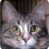 Adopt A Pet :: Socx - Andover, KS