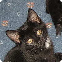 Adopt A Pet :: SAPPHIRE - 2013 - Hamilton, NJ