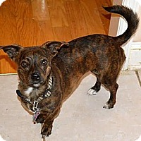Adopt A Pet :: Angel - Marietta, GA