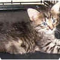 Adopt A Pet :: Fantasy - Dallas, TX