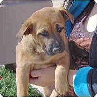 Adopt A Pet :: Hilo - Scottsdale, AZ