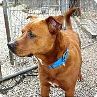 Adopt A Pet :: Angie - Douglas, MA