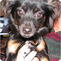 Adopt A Pet :: Boomer - Golden Valley, AZ