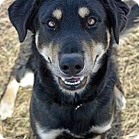 Adopt A Pet :: Melchoir - Cheyenne, WY