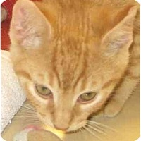 Adopt A Pet :: Buddy - Jenkintown, PA