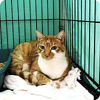 Adopt A Pet :: Orange - Mission, BC