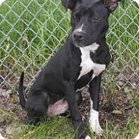 Adopt A Pet :: Kallie - Gary, IN