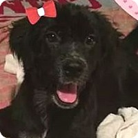 Adopt A Pet :: Mary Ann - Orlando, FL