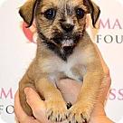 Adopt A Pet :: George