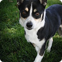 Adopt A Pet :: Dante - Broomfield, CO
