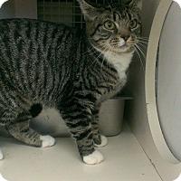 Adopt A Pet :: Sophie - Stafford, VA
