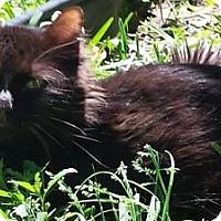 Adopt A Pet :: Andre - Ennis, TX