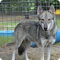 Adopt A Pet :: Sissy - Orlando, FL