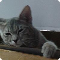 Adopt A Pet :: Angel - Whittier, CA