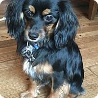 Adopt A Pet :: Zeek - Fairview Heights, IL