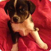 Adopt A Pet :: Cilla - Trenton, NJ