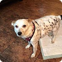 Adopt A Pet :: Moses - New Kensington, PA