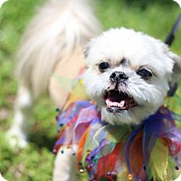 Adopt A Pet :: Goldilox - Nashville, TN