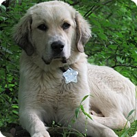Adopt A Pet :: Fenway - Kyle, TX