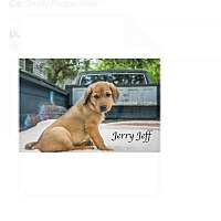 Adopt A Pet :: Jerry Jeff - West Hartford, CT