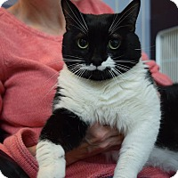 Adopt A Pet :: Boo Boo: Fairfax - Cincinnati, OH
