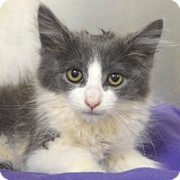 Adopt A Pet :: Iago - Dublin, CA
