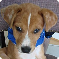 Adopt A Pet :: Diego - Erwin, TN