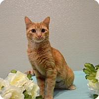 Adopt A Pet :: Blossom - St. Charles, MO