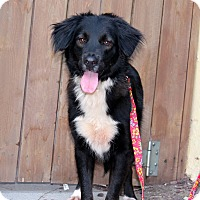 Adopt A Pet :: Patsy - from Costa Rica - Los Angeles, CA