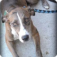 Adopt A Pet :: Sydney - Beaumont, TX