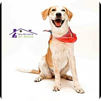 Adopt A Pet :: Pippy - Richardson, TX