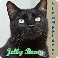 Adopt A Pet :: Jelly Bean - Sarasota, FL