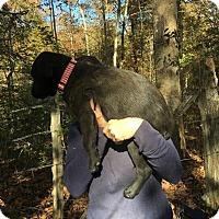 Adopt A Pet :: Glenn - Boston, MA