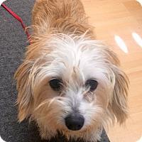 Adopt A Pet :: Nana in CT - Manchester, CT