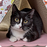 Adopt A Pet :: Sweet Pea - Wilmington, DE