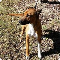 Adopt A Pet :: Autumn - Thomasville, NC