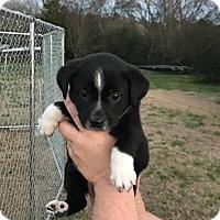 Adopt A Pet :: Clark - Trenton, NJ