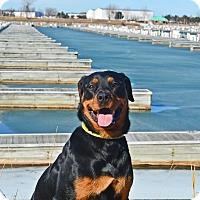 Adopt A Pet :: Reise - Virginia Beach, VA